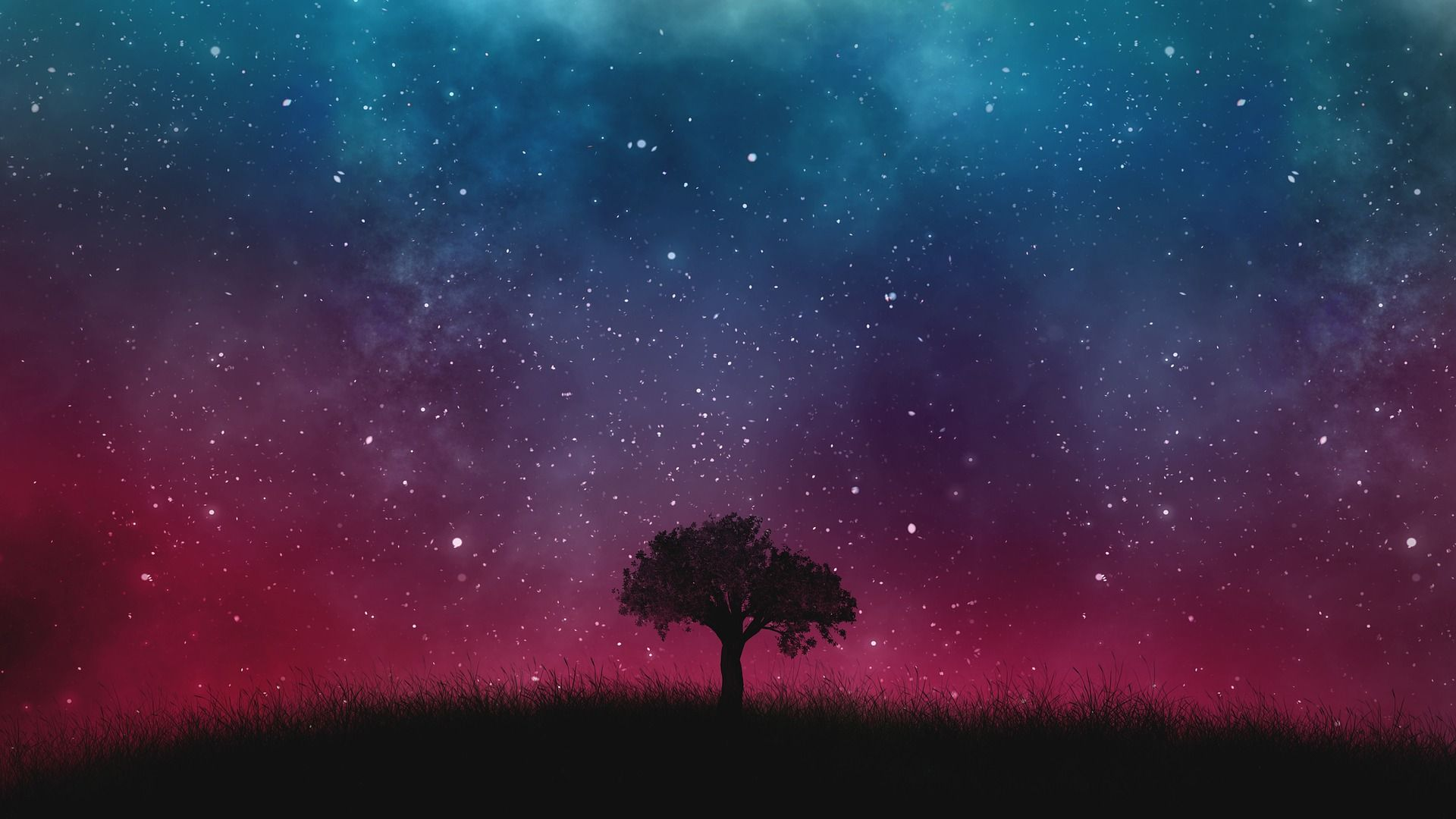 Tree with Milky Way galaxy in background.